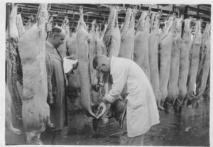 Walter Parr & ? Kay Grading carcasses for payment [Courtesy The Farmer & Stockbreeder]